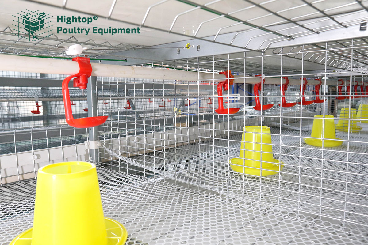 automatic chicken watering system