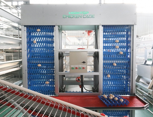 Automatic Egg Collection System, Poultry Egg Collection Machine