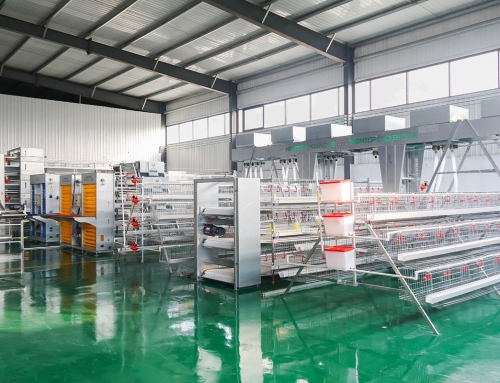 Layer Chicken Cage, Battery Cage System Manufacturers & Supplier
