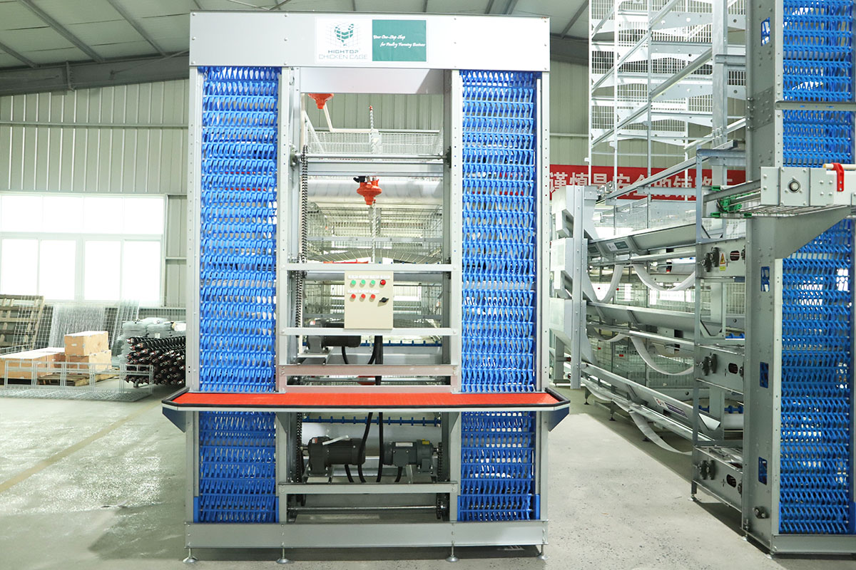 poultry egg collection system
