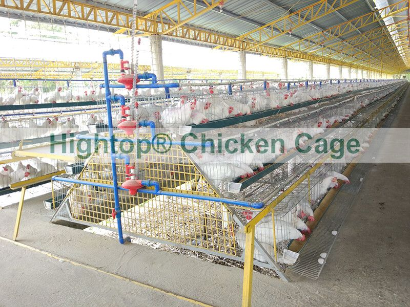 poultry farming project in Philippines