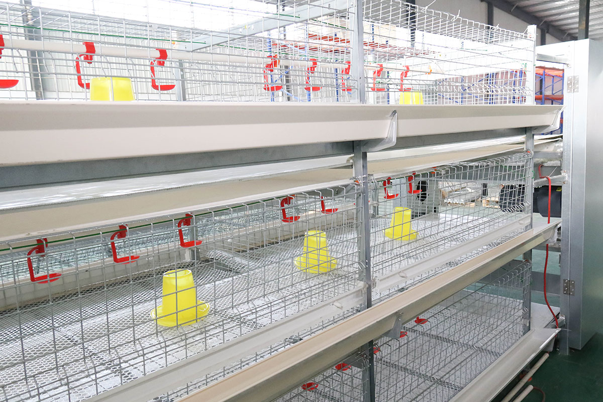 automatic chicks cage