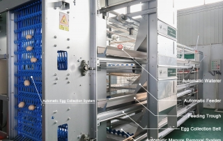 automatic battery cage system