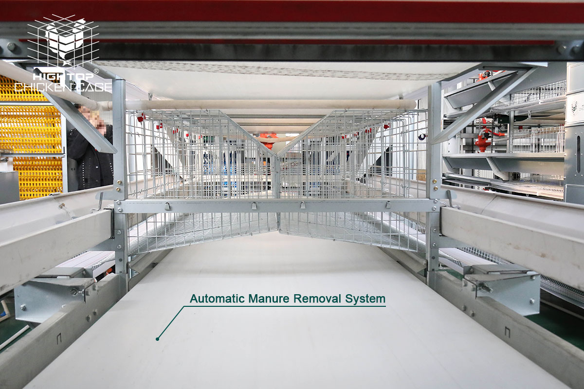 automatic manure removal system