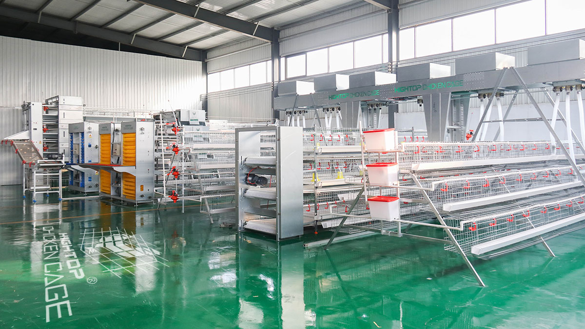 automated poultry farm equipment