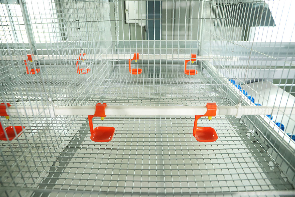 baby chick cages