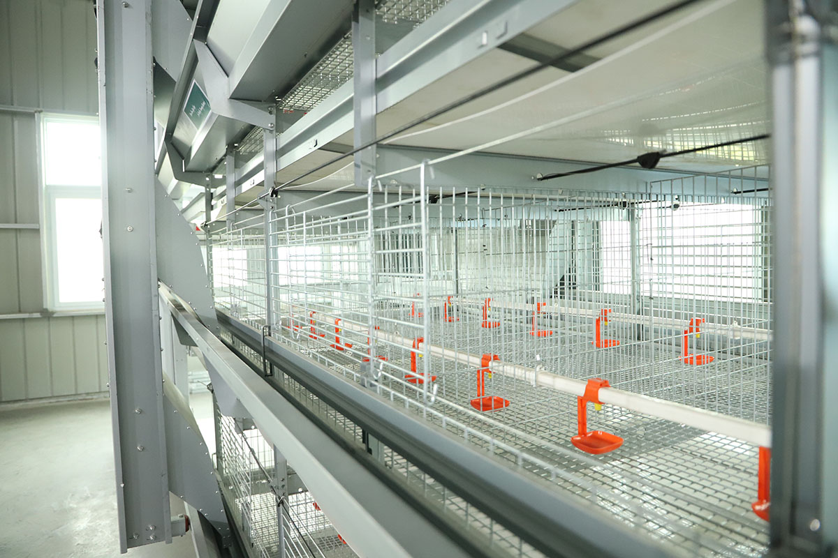 automatic pullet cages