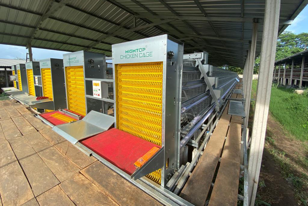 automatic chicken battery cage system in Philippines