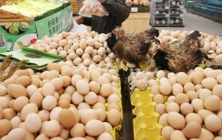 Successful Poultry Business Tips - Marketing Strategy for Poultry