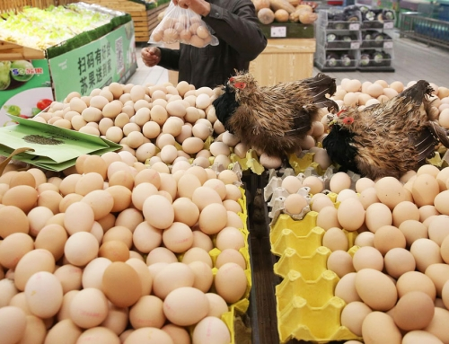 Successful Poultry Business Tips – Marketing Strategy for Poultry