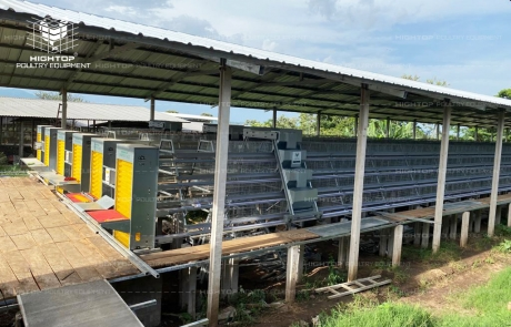 Poultry Farm Project for Native Chicken Farming in Philippines