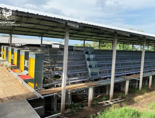 Poultry Farm Project of Native Chicken Farming in Philippines