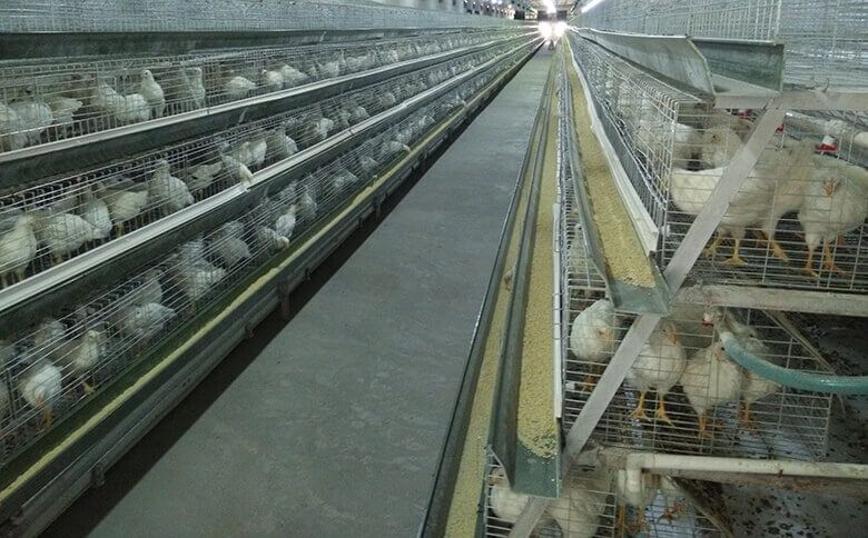 A Type Broiler Cage