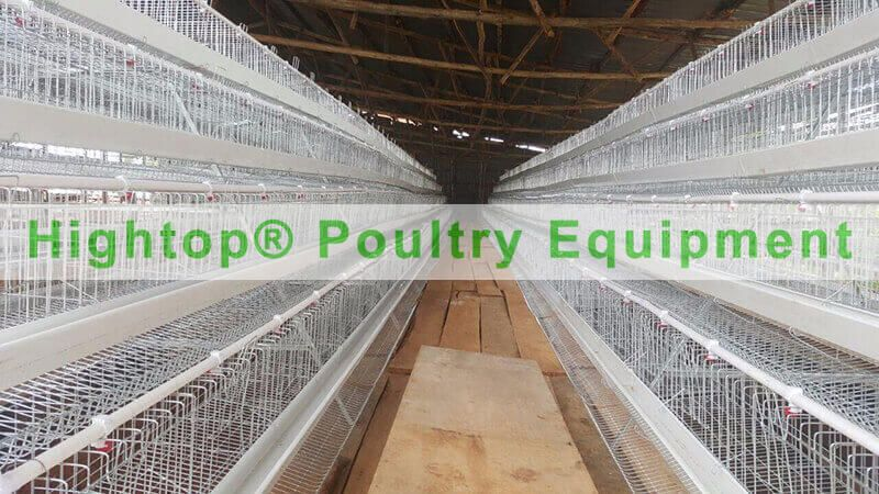 Chicken Cage Project in Uganda