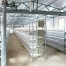 H Type Poultry Cage