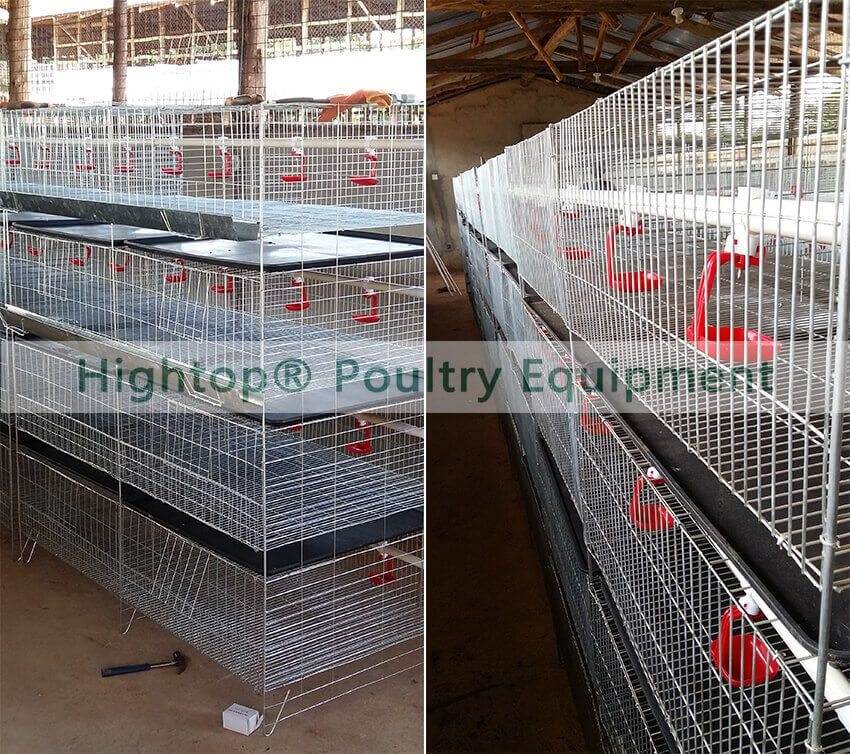 H type baby chicken cage