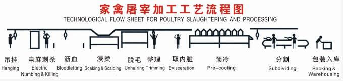 Large Scale Slaughterhouse Processing