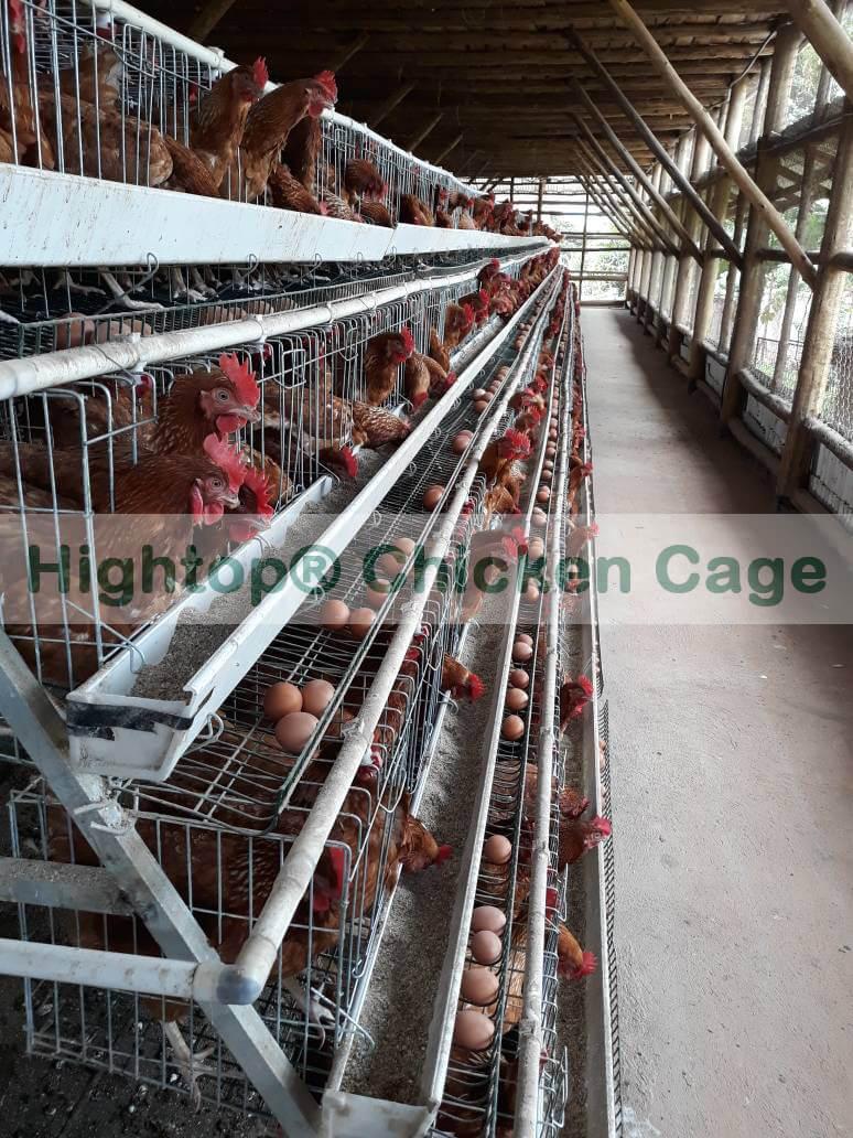 Layer Chicken Farm Project in Uganda