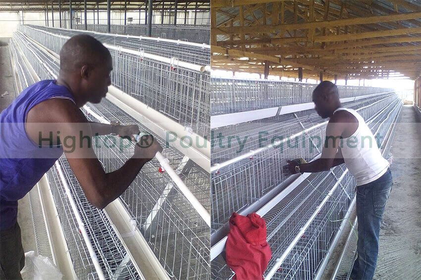 Poultry Farm Battery Cage Project in Zambia