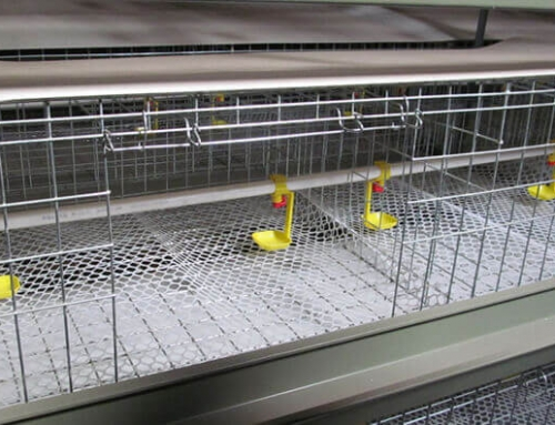 Baby Chicks Cage for Sale, Brooder Cages