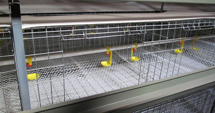 baby chick cage