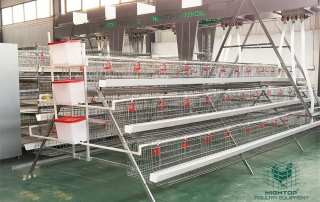battery cage with automatic poultry feeding system