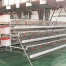 battery cage system with automatic chicken feeding machine