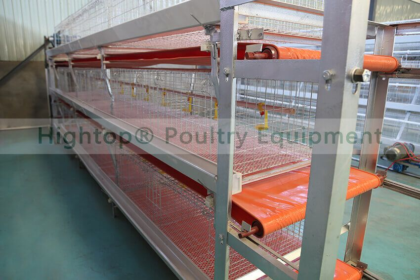 broiler cage with manure removal belt