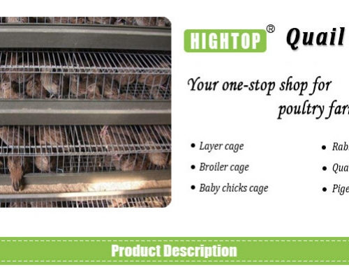Commercial Quail Cages for Egg Production