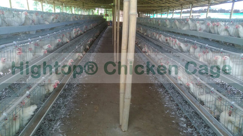 chicken egg farming business