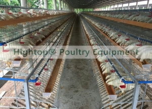 chicken farm finished in Philippines