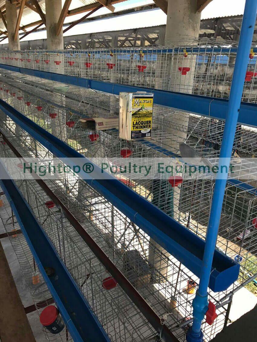chicken farm layer cage in Zambia