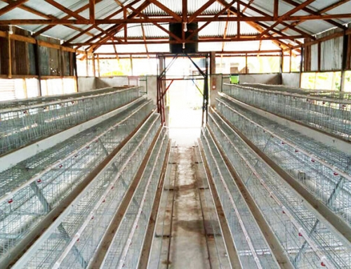 Automatic Poultry Farm Project in Kenya