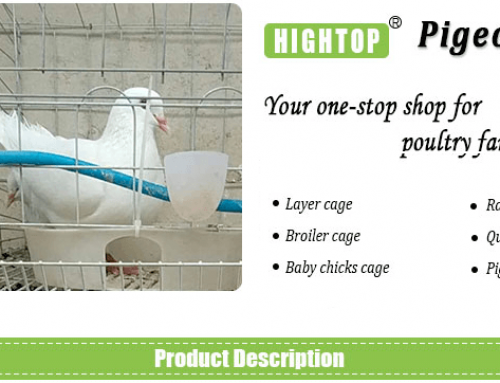 Dove and Pigeon Breeding Cages for Pigeon Farm Business