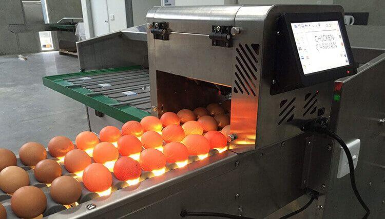 egg ink jet printing machine, egg grading machine