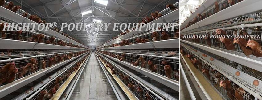 chicken farm equipment