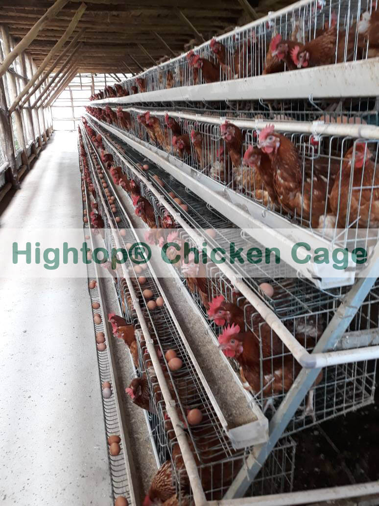 local chicken farms