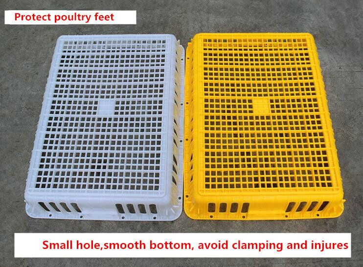 plastic chicken transport crates