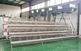 Hightop poultry cage battery cage