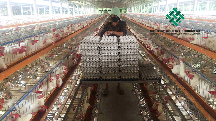 how to start poultry farming business plan in Philippines